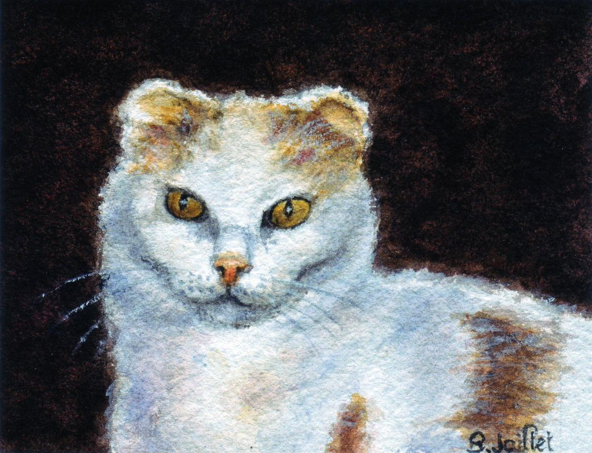 Aquarelle du chat Doudou - mascotte de l'association des amis des chats du Loiret